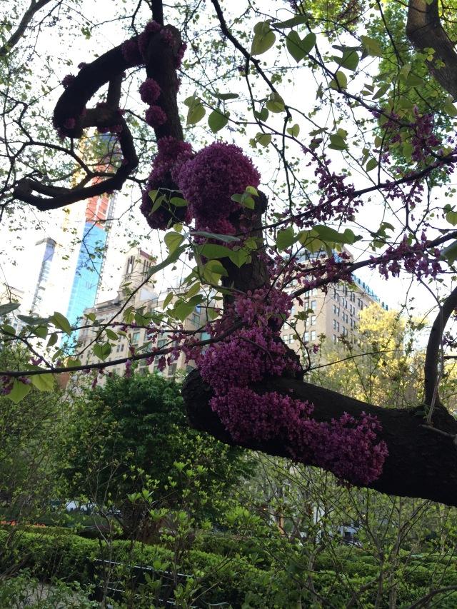 blossom swarm
